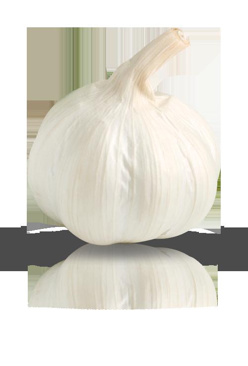 aglio_bianco